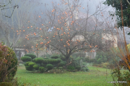 Brouillard,cypres chauve,jardinage 008.JPG