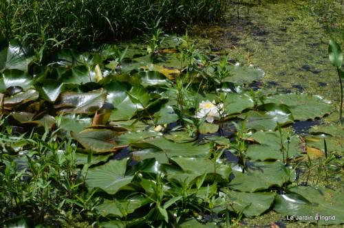 la mare,pt jardin,passiflore,Sophie,le canal,vues jardin 054.JPG