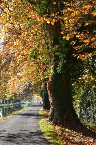 jardin automne,voisinage,canal 176.JPG
