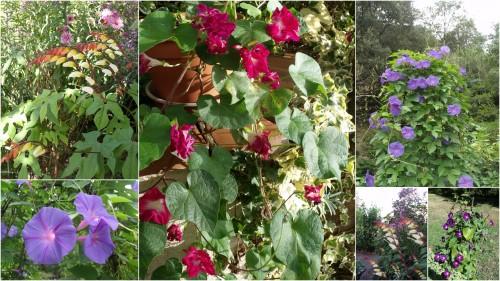 2012-09-27 les Essards,concours terre neuve,jardin,.jpg