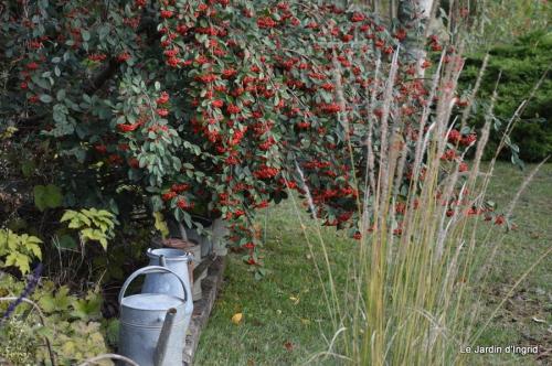 poule d'eau,travaux et dernières fleurs,tonte,sapin bois 049.JPG