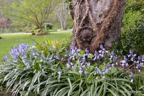 mésanges,escargots,ros. de banks,abeilles,Monpazier,Banes,Forêt 046.JPG