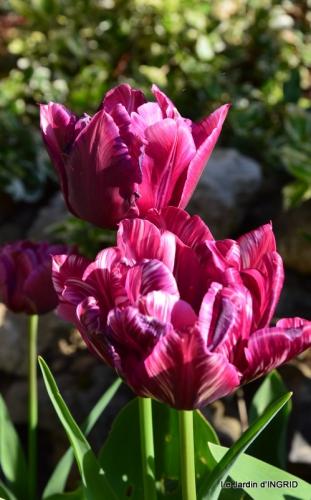 Bergerac, jardin ,arbres fruitiers,printemps 045.JPG