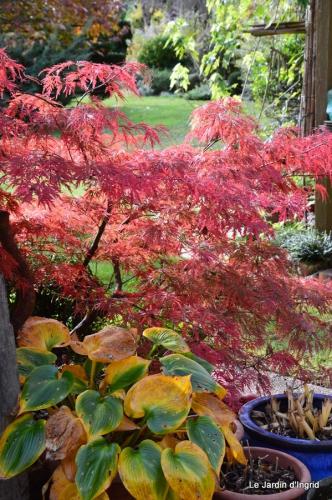 travaux,érable rouge,abeilles,Monpazier,jardin 003.JPG