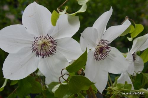 Colombier,Cadouin,jardin,roses,pluie 131.JPG
