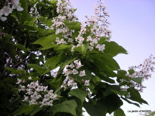 Mouleydier,fl.blanches 058.JPG