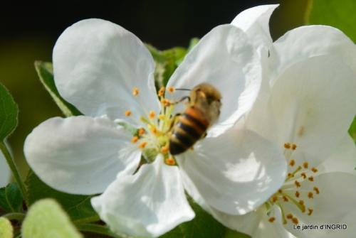 printemps,lilas,tontine 024.JPG