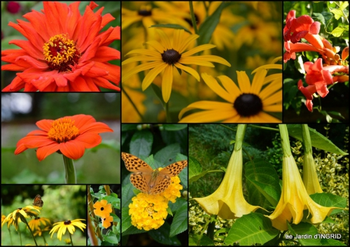 2014-08-15 jardin,les filles,fleurs Peyrichou1.jpg