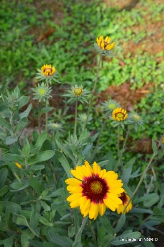 jardin Mme Perichou,grandes fleurs,bouquet,jardin 039.JPG