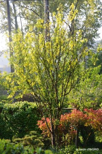 colline,orchidée,nature,jardin fleuri 065.JPG