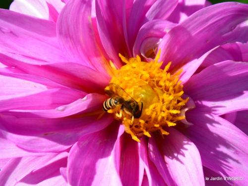 jardin,coeur des fleurs,potager, 140.JPG