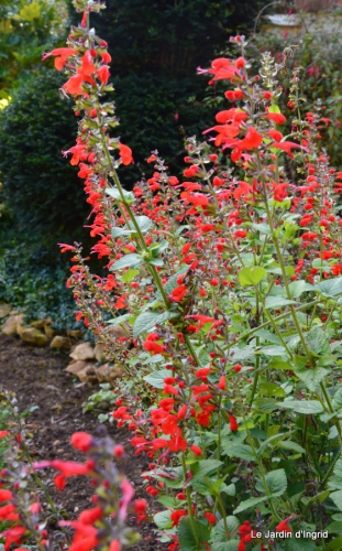 jardin automne ,travaux feuilles 018.JPG