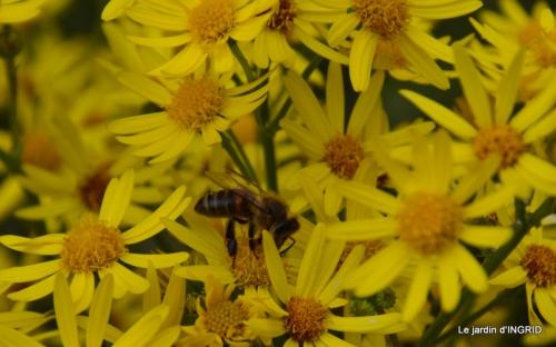 Arya,roses,cygnes,coulobre,nigelles,abeille,cabane 124.JPG