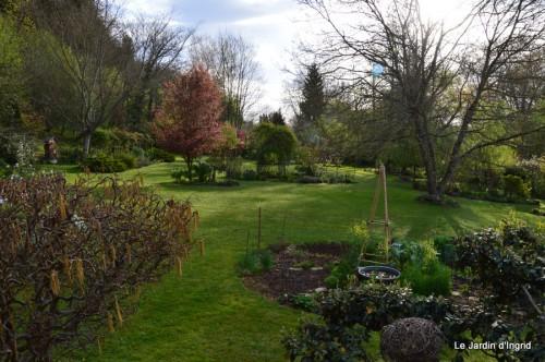paquerettes,arums,laurier palme,jardin 080.JPG