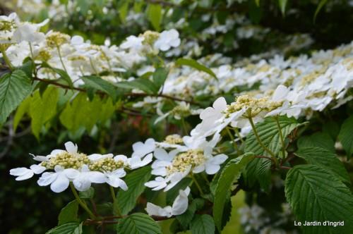 mésanges,escargots,ros. de banks,abeilles,Monpazier,Banes,Forêt 084.JPG
