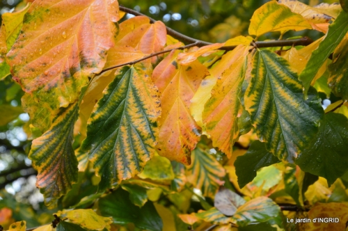 feuillages d'automne et tonte de la pelouse 022.JPG