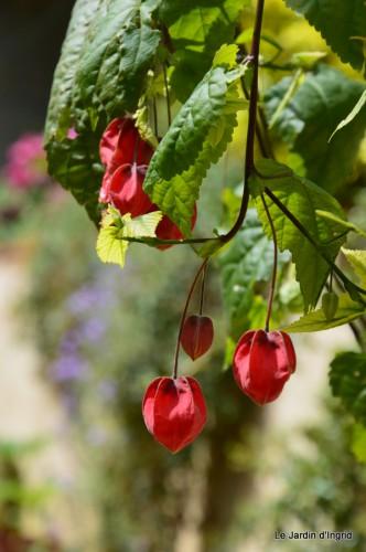 canards,pivoine,malus,abeilles,jardin 097.JPG