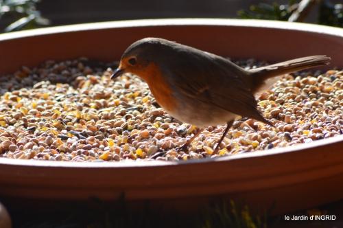 les lettres,les oiseaux,givre 050.JPG