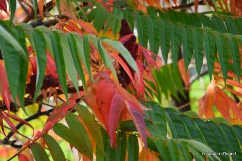sauges,plectanthrus,Romane,canal,manthe r.,automne 066.JPG