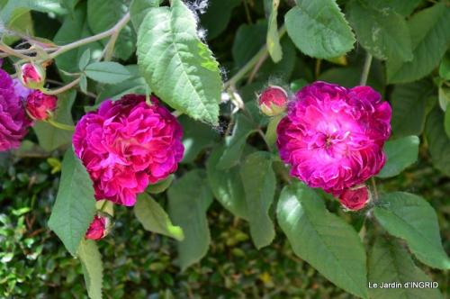 Cadouin,ancolies,roses,pollen,osier,photos Fabien,coquelicots 154.JPG
