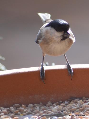 oiseaux,grotte du coulobre 015.JPG