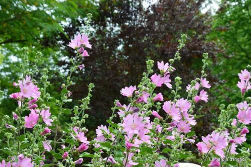 jardin,visites enfants 071.JPG