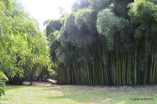 bambous Roque Gageac,jardin,bouquet 151.JPG