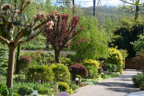 iris,arbre de judée,pivoine,Arya,viburnum,pts plants,cytise,akéb 123.JPG
