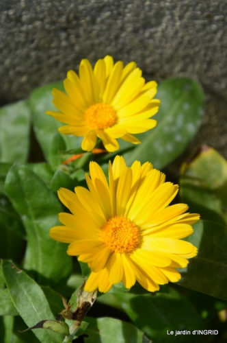 jardin en hiver,à Ciron 069.JPG
