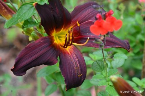 jardin coulobre,cygne, 008.JPG