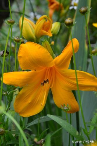 jardin,chez Bernadette,puces,cygnes,pluie 107.JPG