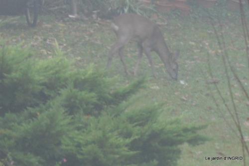 Brouillard,cypres chauve,jardinage 018.JPG