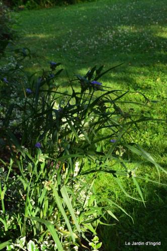 fleurs bleues,hortensia bleu,moi bébé 021.JPG