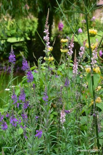 jardin,chez Bernadette,puces,cygnes,pluie 112.JPG