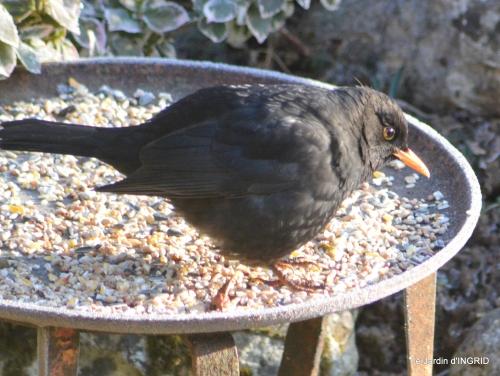 jardin givré,oiseaux 096.JPG