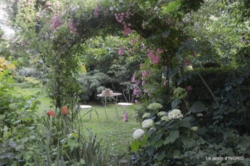 mon jardin,dégats buis, 064.JPG