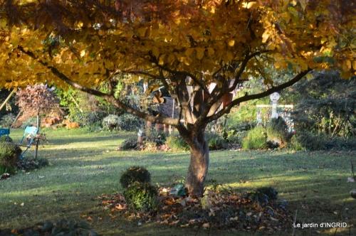 canal,automne,tonte des feuilles 094.JPG