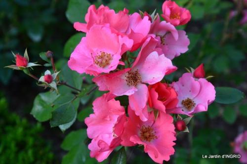 jardin,portes ouvertes,Julie 115.JPG