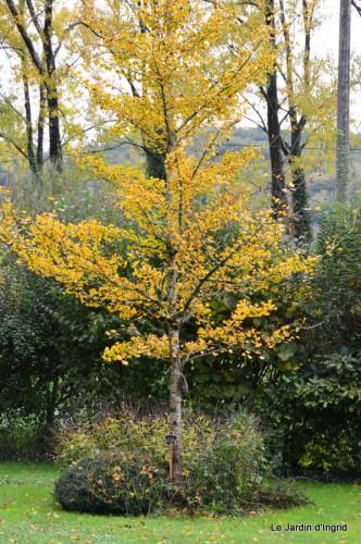 automne,arbres,inondation 010.JPG