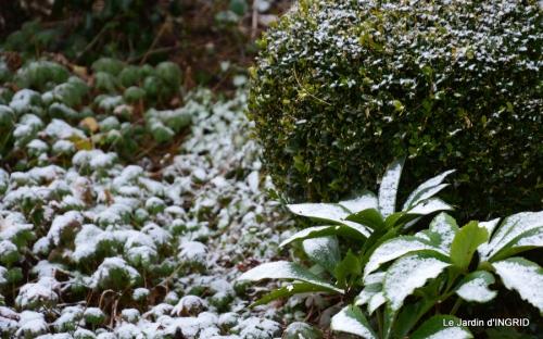 oiseaux première neige 017.JPG