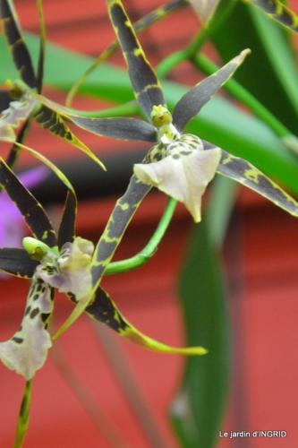 Orchidées,Noel jardiland,lever du soleil 016.JPG