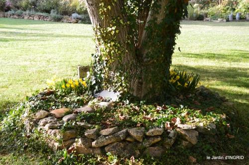 cygnes,jardin,apres la tonte 068.JPG