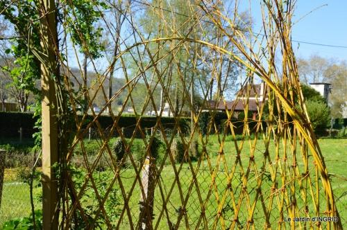 jardin avril,tulipes pivoine,iris d'eau,chenilles 013.JPG