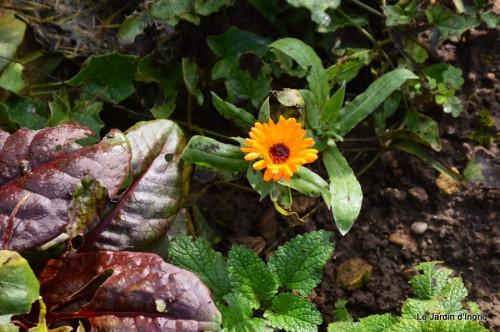 troncs,automne,vieilles photos 005.JPG