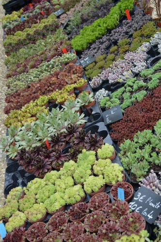 CADOUIN,cascade,iris,roses,fl.sauvages 064.JPG