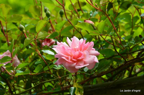 jardin,roses,cabane 019.JPG