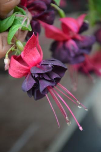 CADOUIN,cascade,iris,roses,fl.sauvages 053.JPG
