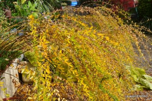 canal,automne,tonte des feuilles 027.JPG