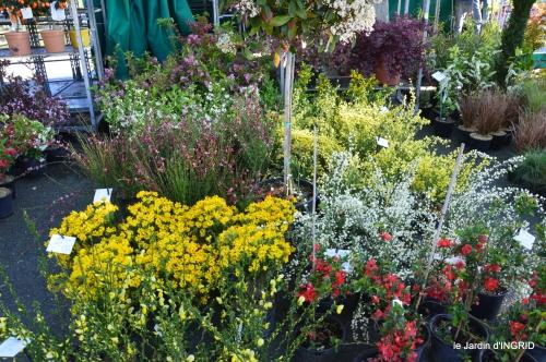 coquelicots,fête des fleurs Lalinde,fouleix,jardinage 050.JPG