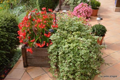 chez Dédé,papillons,Claudine Dordogne,champignons,toile d'araign 056.JPG